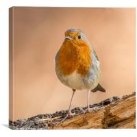 Robin in Northumberland, Canvas Print