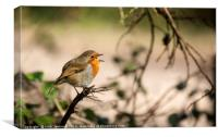 Christmas Robin singing Erithacus rubecula , Canvas Print
