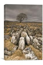 Winter Tree at Malham Moor, Canvas Print