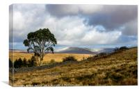 Eucalyptus Tree Central Brecon Beacons South Wales, Canvas Print