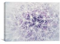Dandelion and Droplets, Canvas Print