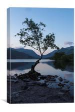 Llyn Padarns lonely Tree, Canvas Print