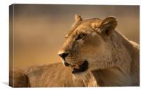 Lioness Botswana , Canvas Print