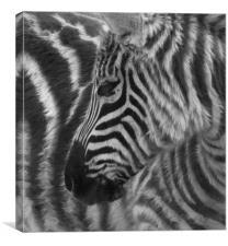 Striped, Canvas Print