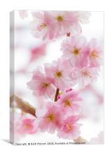 Cherry Blossom Petals , Canvas Print