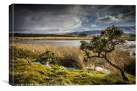 Mynydd Illtud Common, Brecon Beacons, Canvas Print