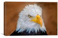 Bald Eagle Portrait, Canvas Print