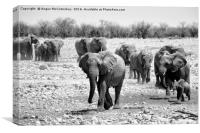 African elephants with young approaching waterhole, Canvas Print