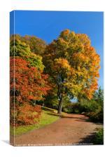 Autumn walk, Canvas Print