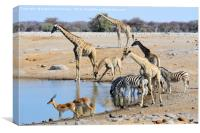 Early morning rush hour at the waterhole, Canvas Print