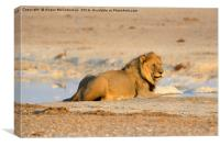 King of the waterhole, Canvas Print