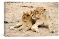 Lioness with cub, Canvas Print