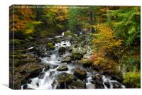 River Braan in autumn, Canvas Print