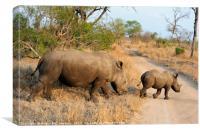 Female rhino with calf crossing track, Canvas Print