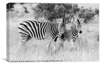 Female zebra with foal (mono), Canvas Print