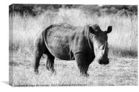 White rhino in bush (mono), Canvas Print