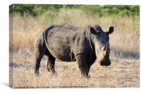 White rhino in bush, Canvas Print