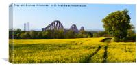 Rapeseed field with three bridges panoramic, Canvas Print