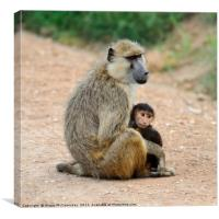 Baboon with young, Amboseli National Park, Kenya, Canvas Print