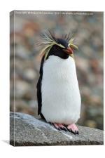 Rockhopper penguin, Canvas Print