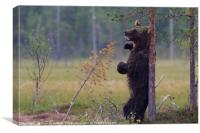 Brown Bear Scratching its back, Canvas Print