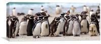 Magellanic Penguins, Falkland Islands, Canvas Print