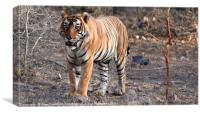 Bengal Tiger, Canvas Print