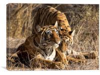 Tiger and Cub, India, Canvas Print