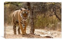 Bengal Tiger at Ranthambhore National Park, India, Canvas Print