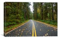 Empty road on the way to Hoh Rainforest in Washing, Canvas Print