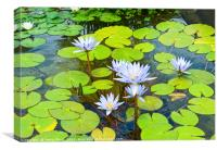 Purple water lilies in a pond., Canvas Print