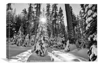 Winter Wonderland of Badger Pass in Yosemite Natio