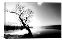 Trees by Ullswater in the Lake District, Canvas Print