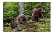 Brown Bear Couple in Forest, Canvas Print
