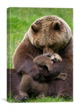 Brown Bear Mother cuddling Cub, Canvas Print