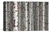 Quaking aspen, Canvas Print