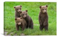 Brown Bear Cubs, Canvas Print