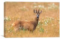 Roe Deer , Canvas Print