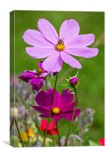 Colourful Flowers in Meadow, Canvas Print