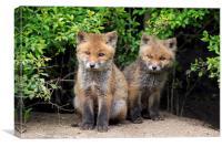 Cute Red Fox Kits, Canvas Print