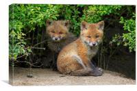 Cute Red Fox Cubs, Canvas Print