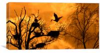 Heron Rookery at Sunset, Canvas Print