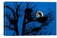 Heron on Nest at Night, Canvas Print