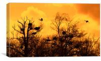 Grey Herons Landing in Tree at Heronry at Sunset, Canvas Print