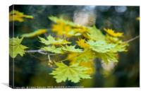 Autumn leaf., Canvas Print