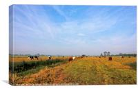 Cattle On The Somerset Levels, Canvas Print