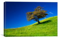 Single tree on a grassfield, Canvas Print