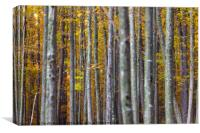 Colorful autumnal landscape, Canvas Print