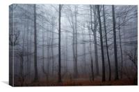Spooky forest and mist, Canvas Print