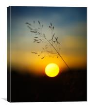 Selective focus sunset, Canvas Print